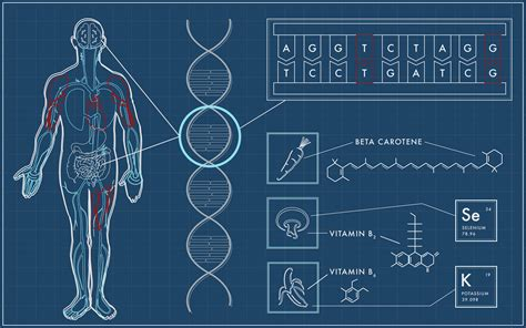 The Genome genetic testing and the nutrition genome report
