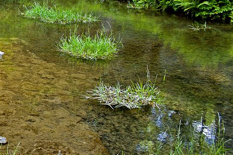 green water sacramento landscape