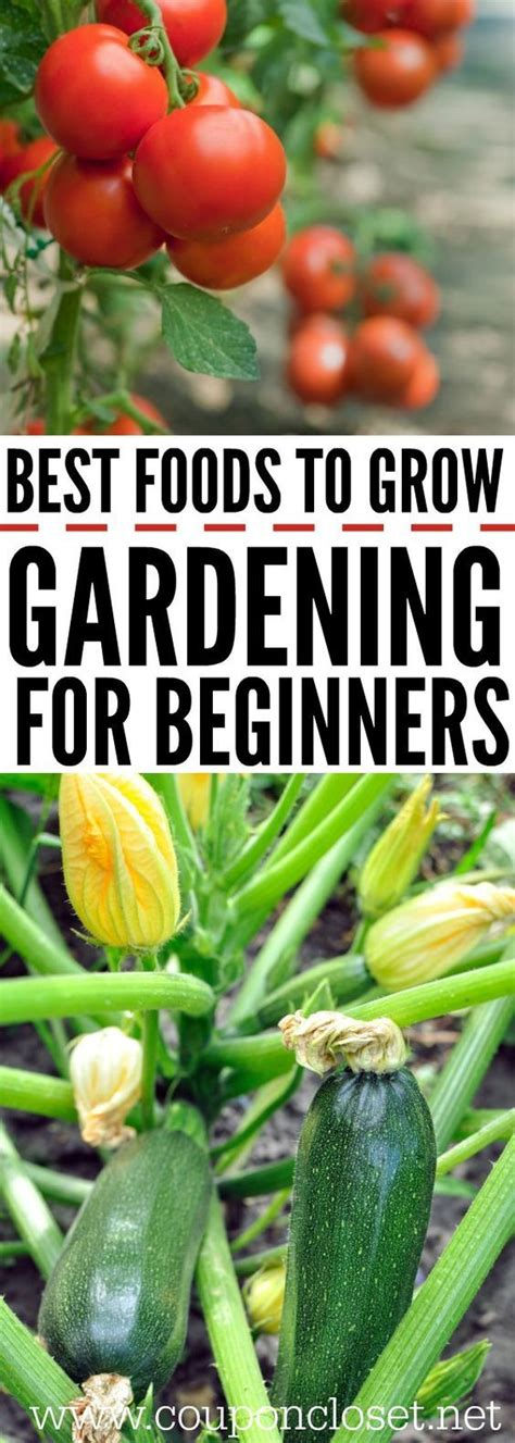 790 best garden advice and diy projects images on