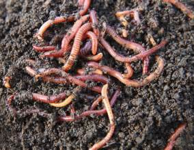 what worm farm is best for you good life permaculture
