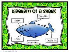 libro smart about sharks fun facts about sea animals learning games shark fun facts underwater animals kids