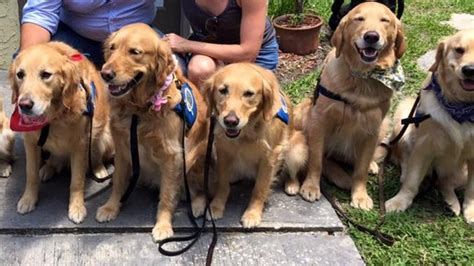 comfort dogs sent to support grieving families of orlando