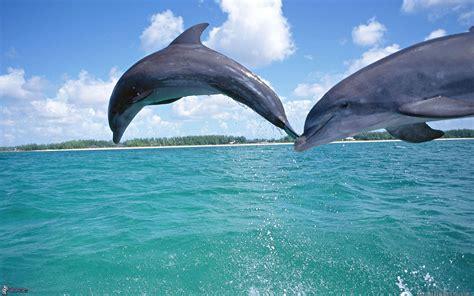 animales del mar gran delf n delfines saltando