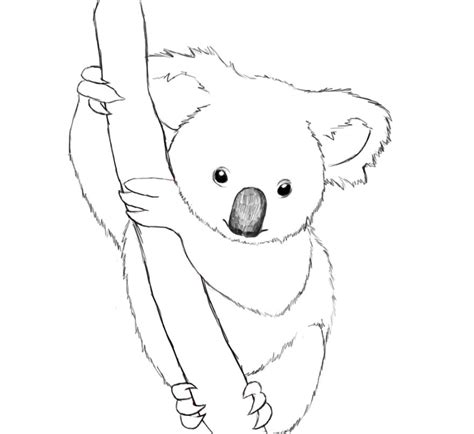 cute koala coloring pages cute baby koala coloring pages www imgkid com the