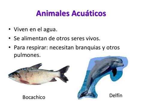 imagenes animales que viven en el agua d 243 nde viven los animales juan jose