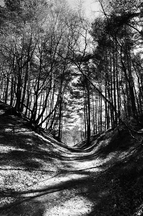 imagenes invierno blanco y negro fotos gratis paisaje 225 rbol naturaleza bosque rama