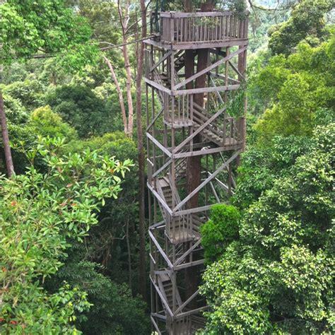tattoo artist balikpapan canopy bridge at bukit bangkirai national park balikpapan