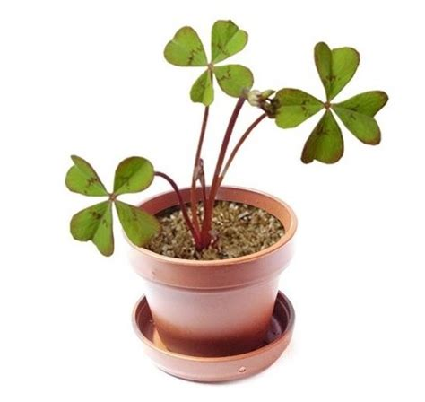 most popular home decorating blogs most popular home decorating blogs top 3 lucky plants to