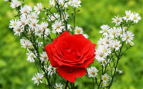 flower ke wallpaper download free gulab ka phool photos mobile dady mobile prices