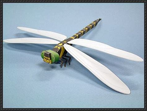 dragonfly paper craft animal paper model dragonfly free template