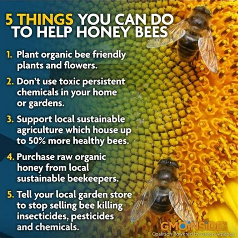 the bee friendly garden easy ways to help the bees and make your garden grow books save the bees honey bee honey comb