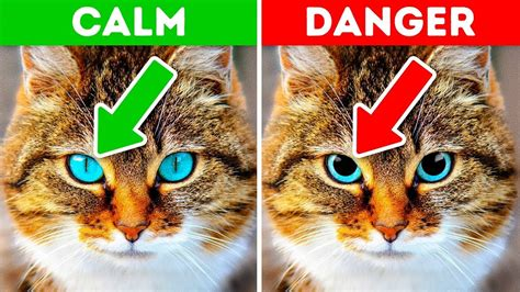signs your is 12 signs your pet is for help