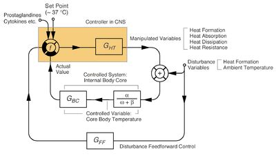 thermoregulation in humans wikipedia