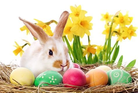One Story Farmhouse easter in colne colne town council official website