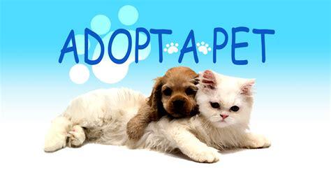 adoptapet dogs adopt a pet tuesday wesley