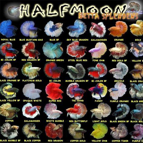 Plakat Cupang by Jenis Ikan Jenis Jenis Ikan Kerapu Kepri Fishing