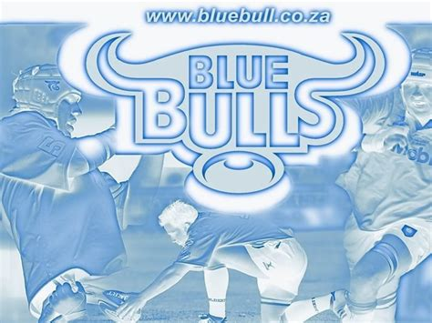 wallpaper blue bulls blue bulls wallpapers wallpaper cave
