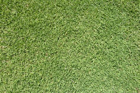 santa anna couch seed turf varieties complete turf suppliescomplete turf supplies