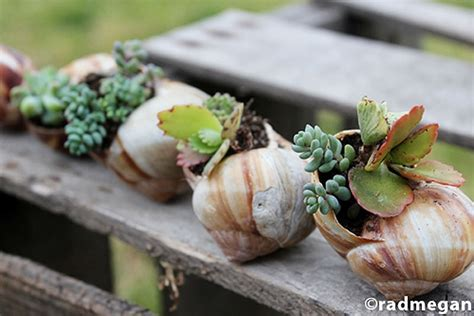 diy mini gardens that grow inside your favorite seashells bit rebels