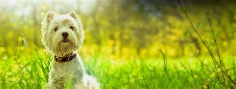 grossisti alimenti per animali la zootecnica prodotti farmaceutici veterinari