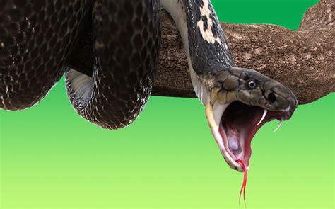 bit by rattlesnake dreaming about a snake bite interpretation symbols