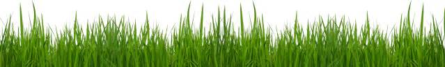 free grass cliparts free download clip art free clip art clipart library
