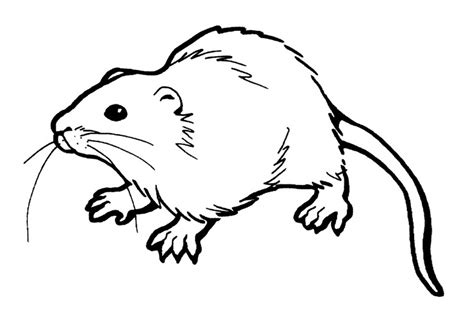 Coloring Pages For by Free Printable Rat Coloring Pages For