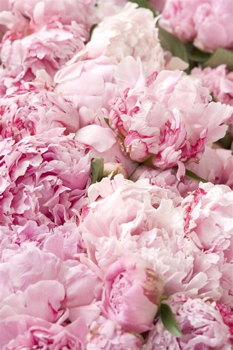 pink peonies nursery 310 best f l o w e r s images on pinterest