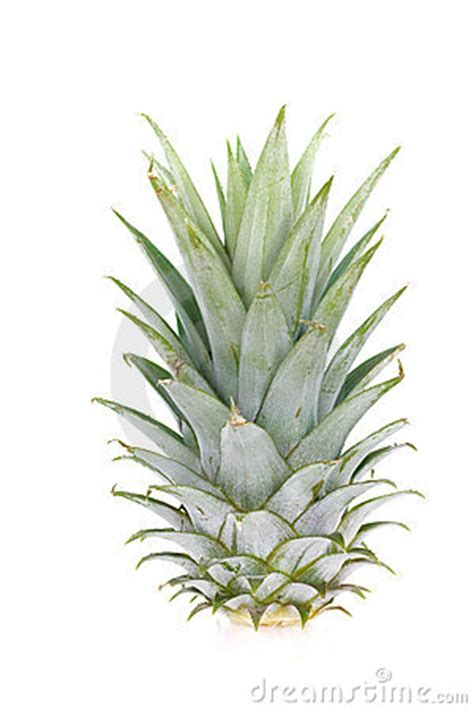 printable pineapple leaves pineapple leaf royalty free stock photography image