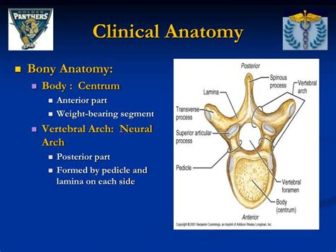 Ppt Thoracic And Lumbar Spine Anatomy Powerpoint Cervical Spine Anatomy Ppt