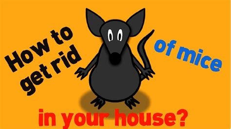 how to get rid of mice in house how to get rid of mice in your house fast and naturally youtube