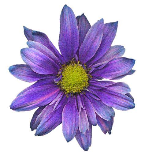 imagenes terrorificas con movimiento gif resultado de imagen de gifs con movimiento de flores