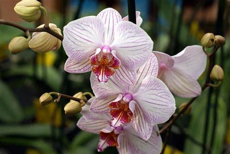 orientali fiori fiori orientali fiori di piante fiori asiatici