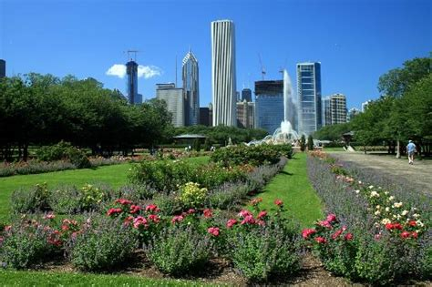Gardens In Chicago by Looking From Grant Park Toward Downtown Chicago