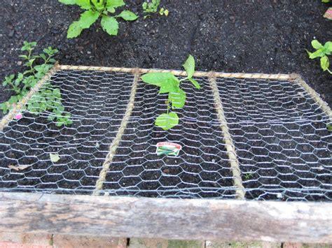 Diy Cucumber Trellis diy cucumber trellis gardening