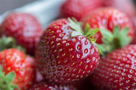 wann bekommt steuern zurã ck wann pflanzt erdbeeren wann pflanzt erdbeeren