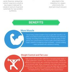 d protein powder benefits benefits of whey protein powder visual ly