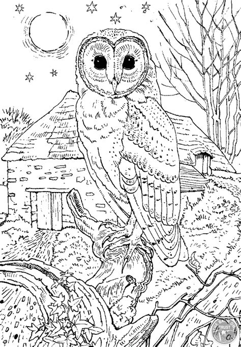 Barn Owl Colouring Page Coloring Page Barn Owl Barn Owl Coloring Pages