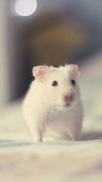 mobile hamster golden hamster baby pet hamsters of and