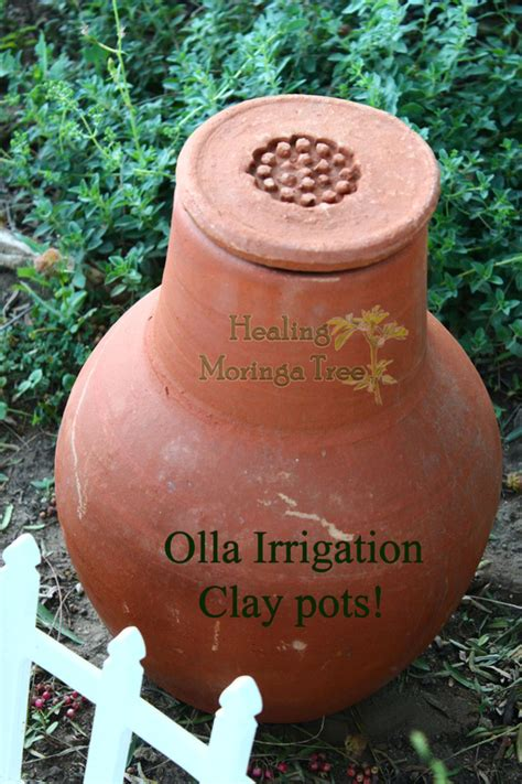 buy irrigation garden olla clay pots moringa capsules