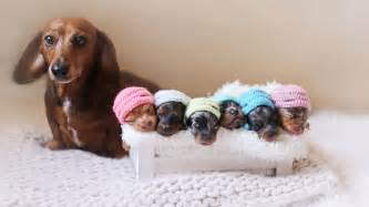 newborn puppy 6 newborn puppies fetch smiles in photo shoot with see the pics today