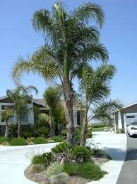 small yard landscaping ideas 5682 palm tree landscaping ideas search