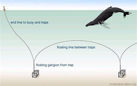 lobster trap diagram lobster pot diagram center for coastal studies