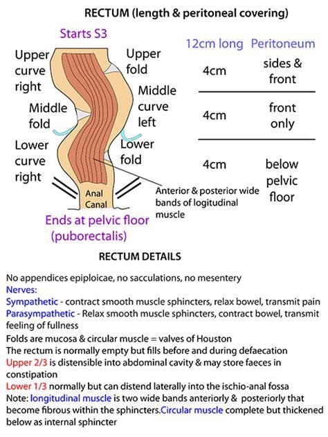 rectum and diagram instant anatomy abdomen areas organs bowel rectum