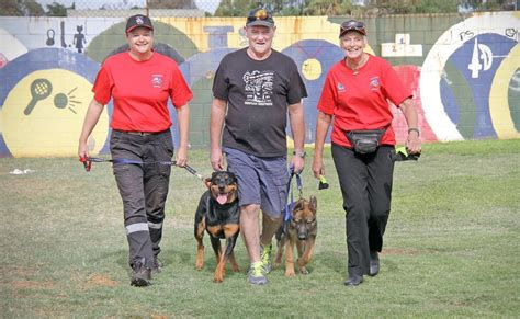 how sniffer dogs are trained goldfeilds sniffer team begins the west australian