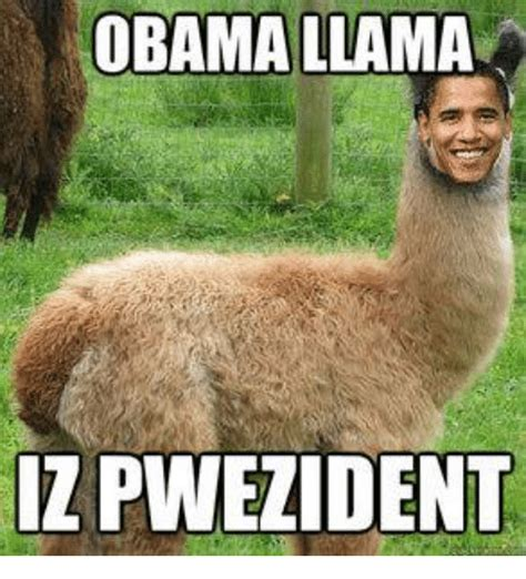 Llama Meme - llama meme related keywords llama meme long tail