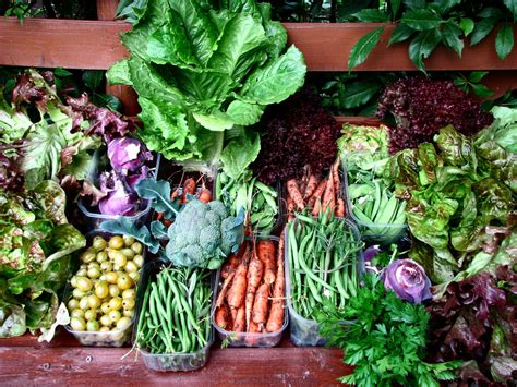 les lã gumes vegetable recipes from the market table books quels l 233 gumes r 233 colter en juin