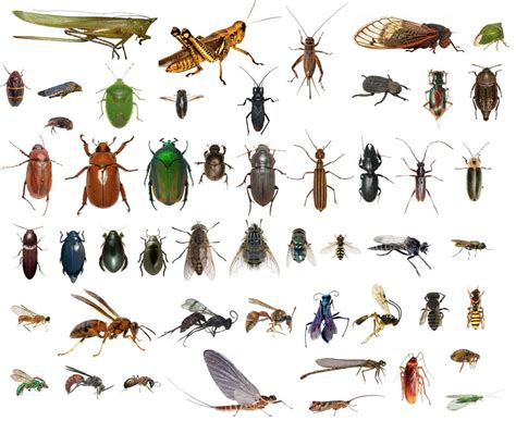 list url bug videomax 50 dead bugs entomology class insect bug collection