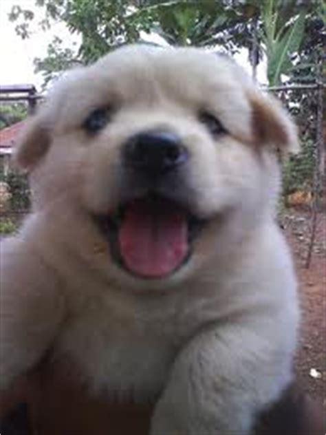 cara merawat anak anjing gambar hidup