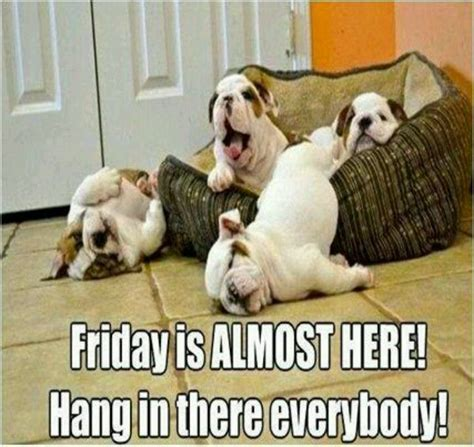 Almost Friday Meme - hang in there it s almost friday adorable pinterest